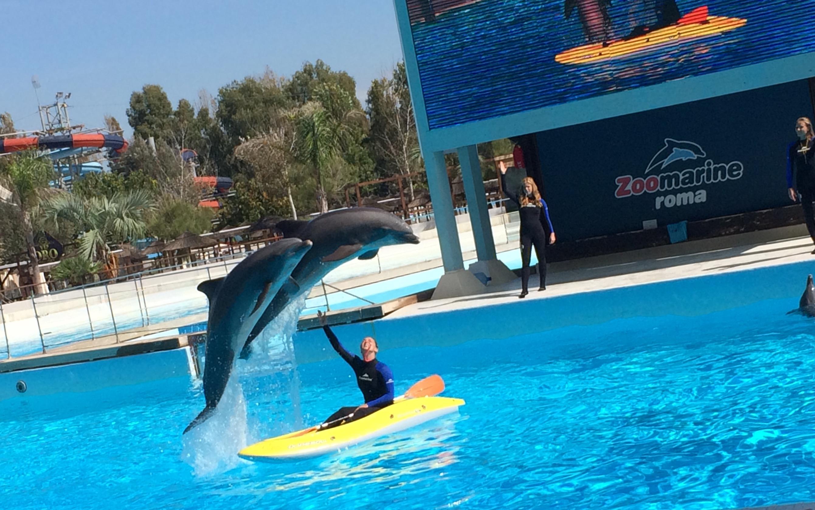 adesso gioco zoo marine gratis